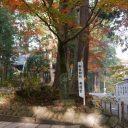 中尊寺の紅葉の風景
