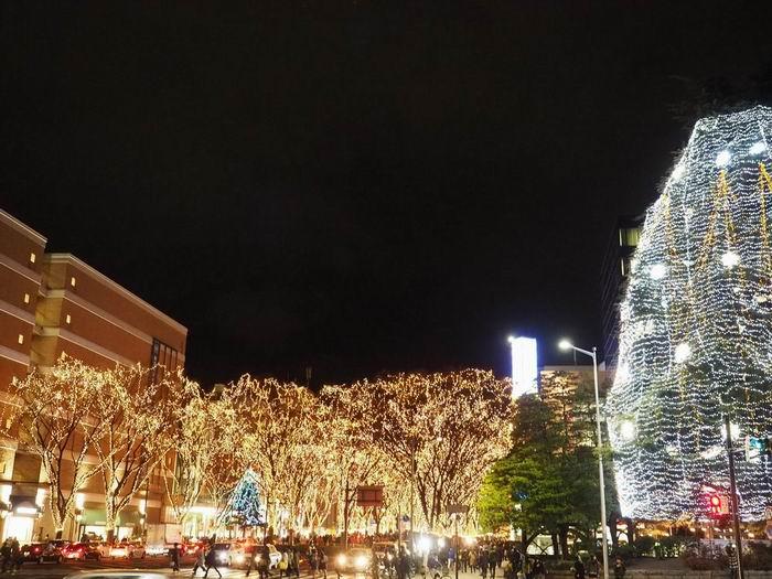 仙台光のページェントの写真画像勾当台公園から望んだ写真