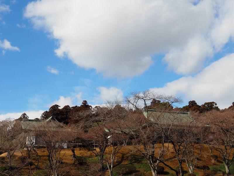 塩釜神社の桜の木の風景写真