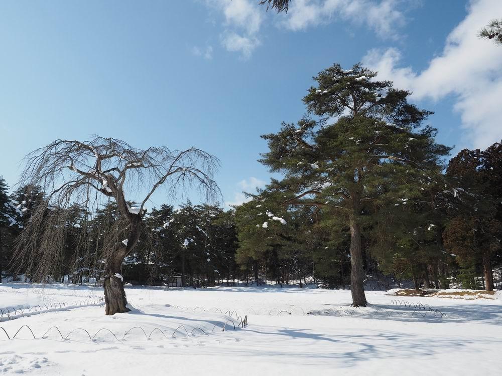 毛越寺冬の風景大泉ヶ池の風景7