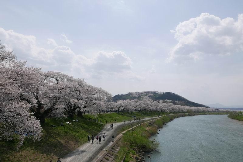 一目千本桜の風景写真
