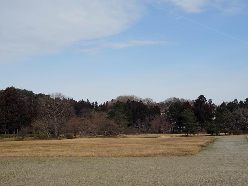 観自在王院跡の桜の木の風景