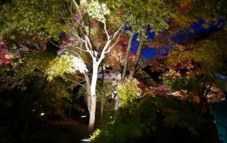 円通院のライトアップ風景写真