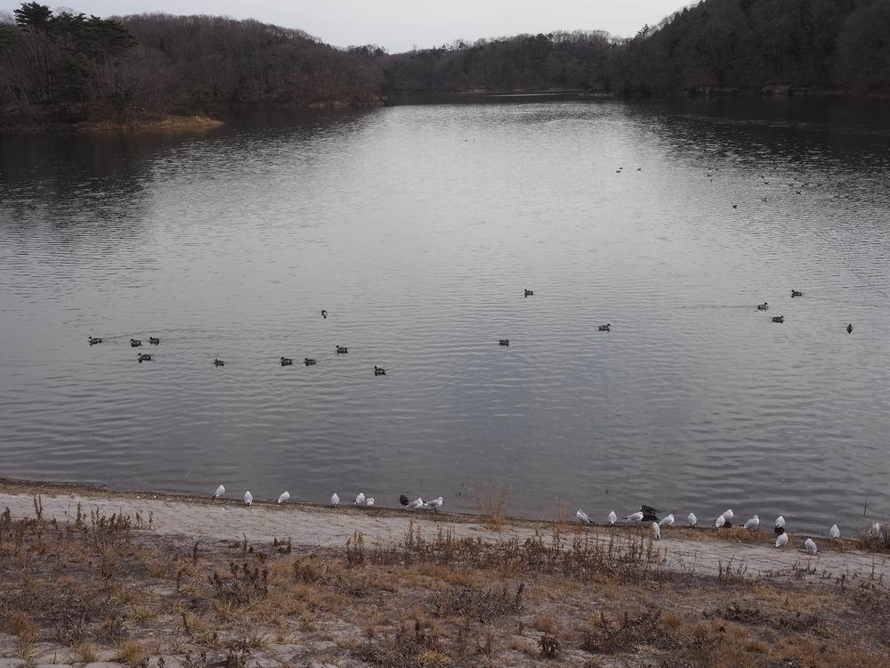 加瀬沼公園の加瀬沼の風景