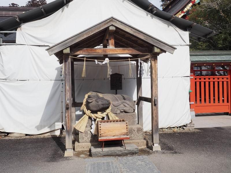 塩釜神社の牛