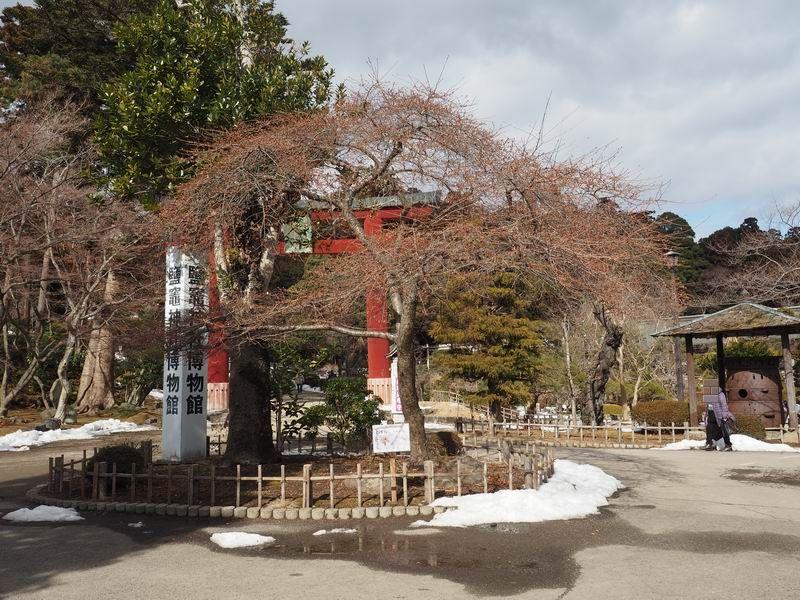 塩釜神社の桜の木の風景