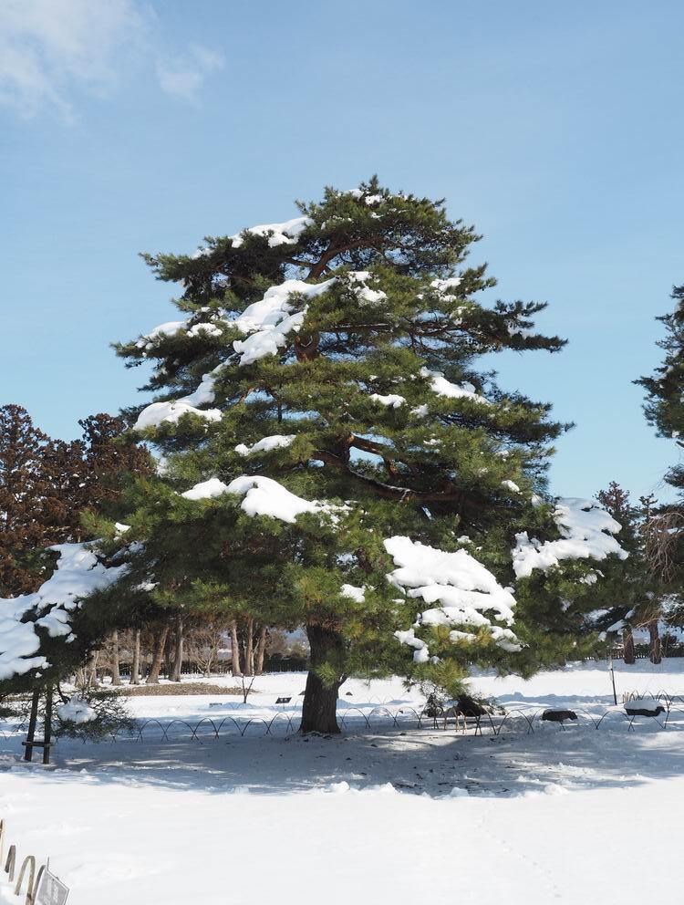 毛越寺冬の風景大泉ヶ池の風景9