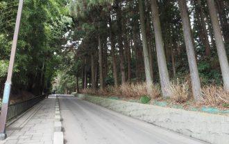 瑞鳳殿の参道