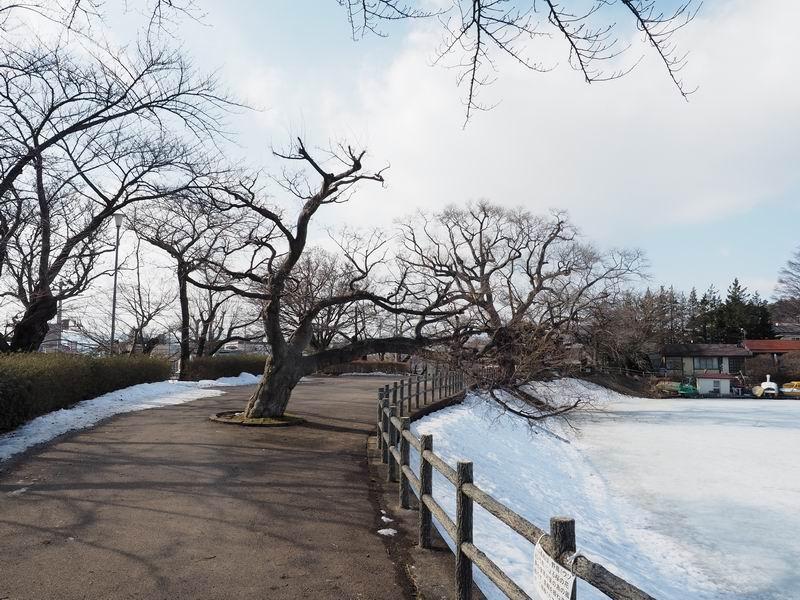 高松公園の桜が咲く前の風景写真