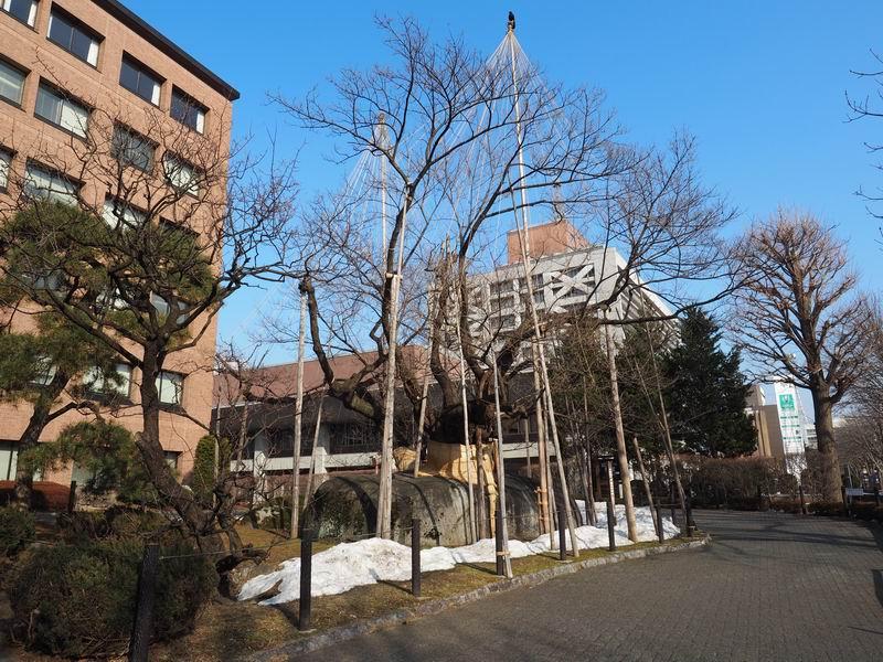 石割桜の桜の咲く前の風景写真