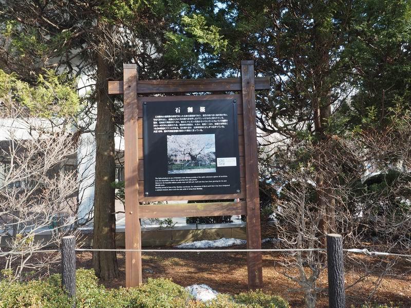 石割桜の説明看板