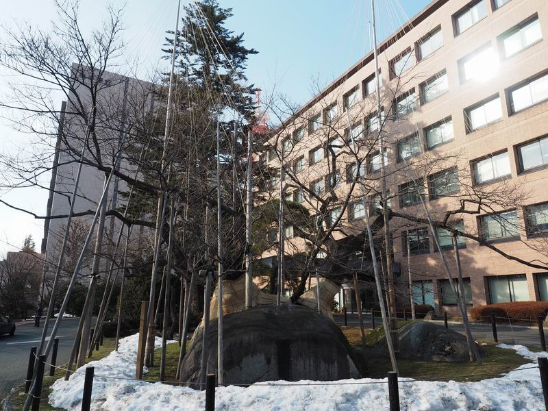 石割桜の風景写真