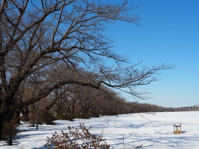 北上展勝地の桜の咲く前の風景写真