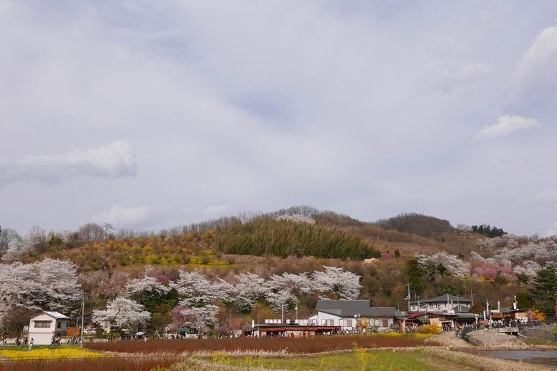 花見山公園の混雑の風景写真