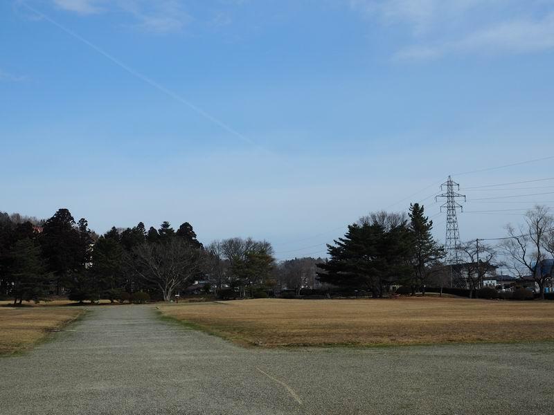 観自在王院跡の桜の木の風景写真