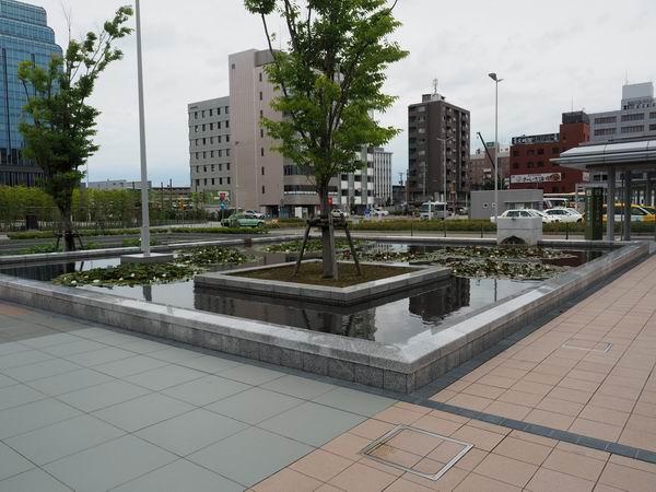 金沢駅西口の池の周辺の風景