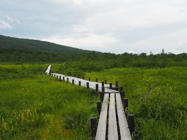世界谷地原生花園の木道の風景写真