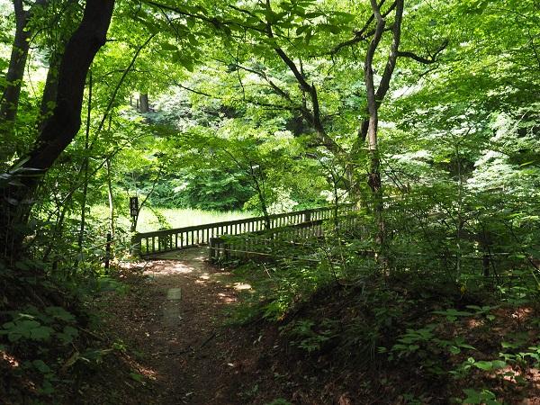 釜淵の滝の遊歩道の月見橋の風景写真