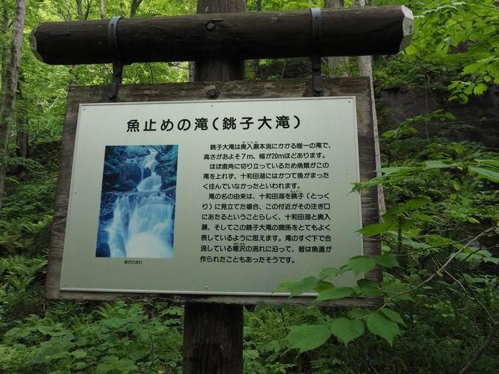 奥入瀬渓流の銚子大滝の説明書き