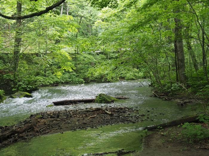 奥入瀬渓流の川の渓流の流れの写真