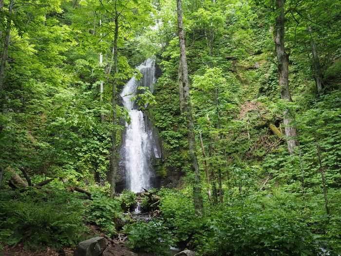 奥入瀬渓流の川の渓流の滝の写真