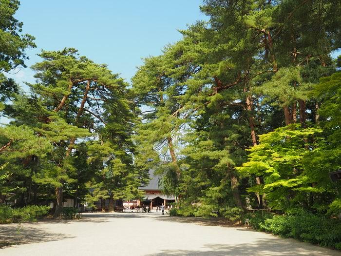 毛越寺初夏の風景写真の画像
