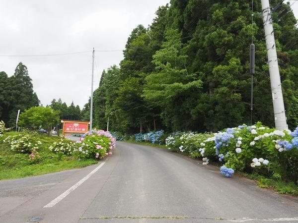 道の悪アジサイ園入り口風景写真