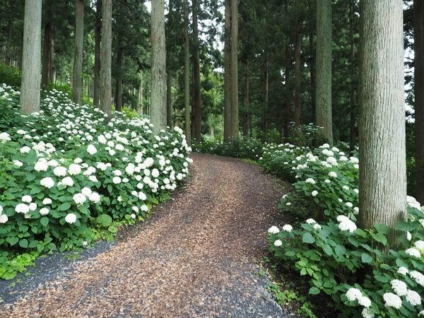 みちのく紫陽花公園の散策ルートの風景写真