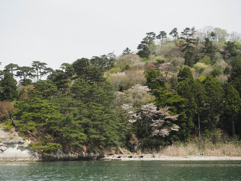 嵯峨渓船からの風景桜