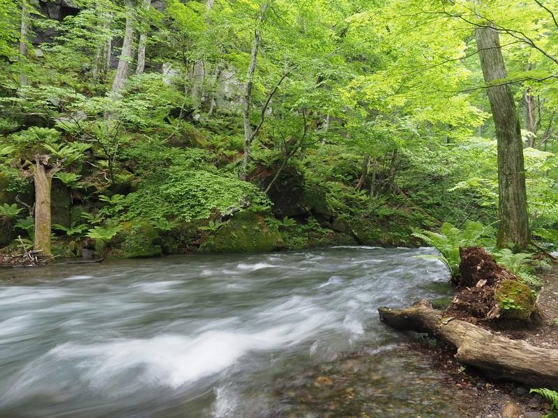 奥入瀬渓流の春の風景