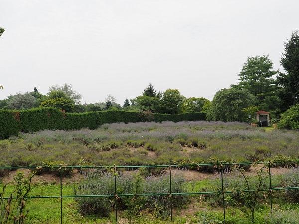 館ヶ森アーク牧場のラベンダーの終わった風景写真