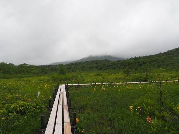 世界谷地第一湿原の木道とニッコウキスゲの写真