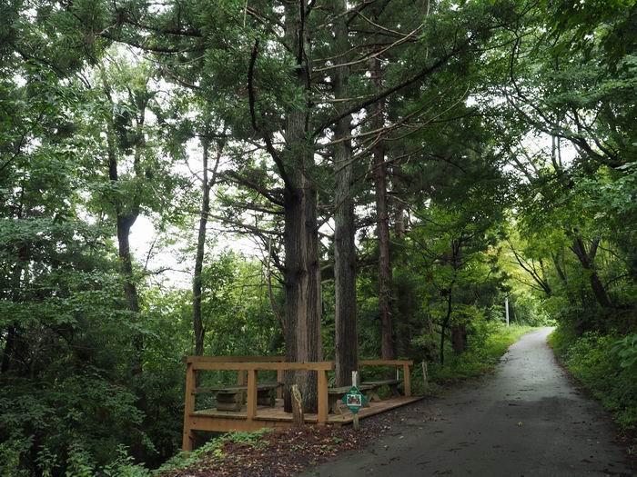 花咲山展望台遊歩道の二本の杉の大木の風景写真