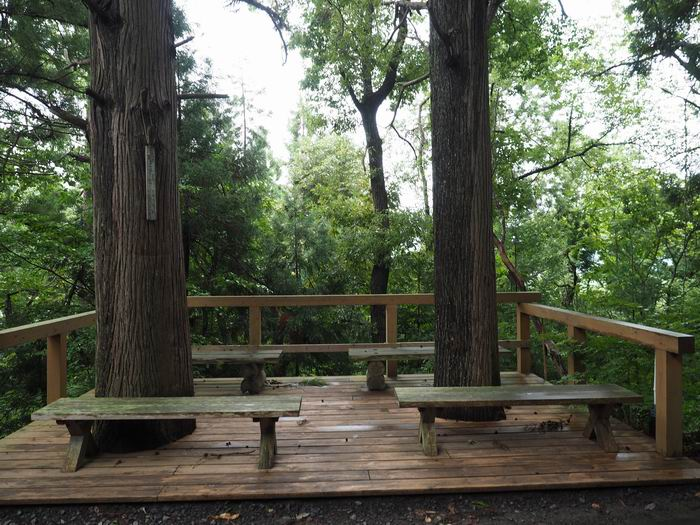 花咲山展望台遊歩道の二本の大木の休憩所