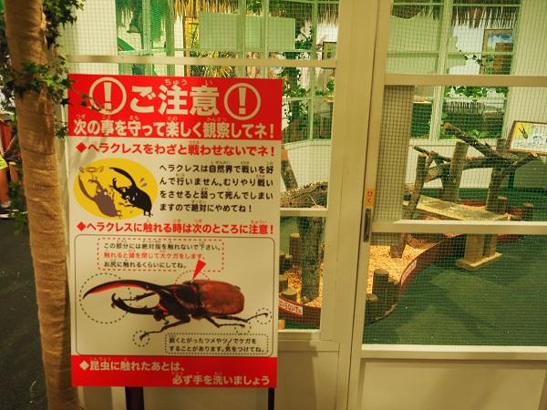 鬼首世界の昆虫館のヘラクレスの展示場所