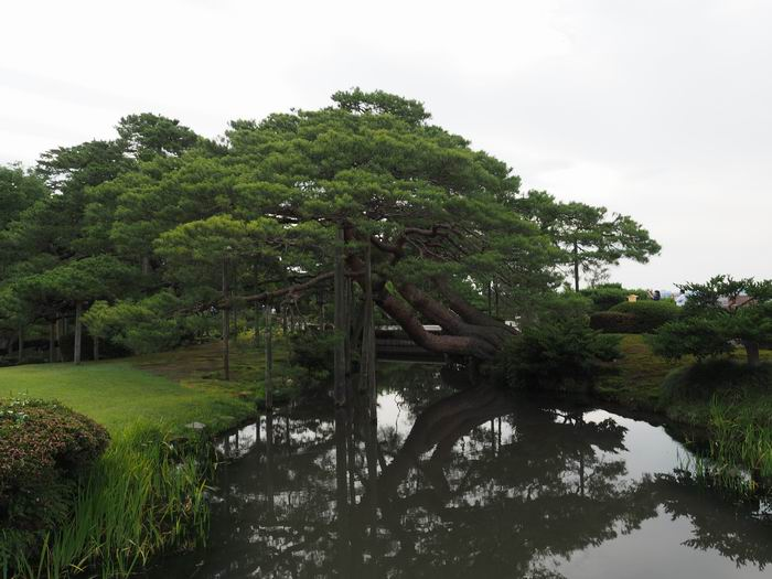 兼六園の末の風景写真