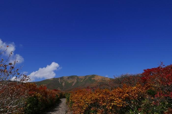 栗駒山の紅葉の登山風景写真