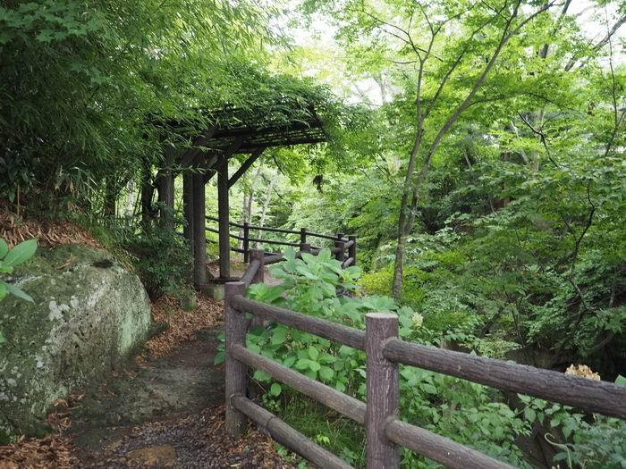 磊々峡の遊歩道の風景写真