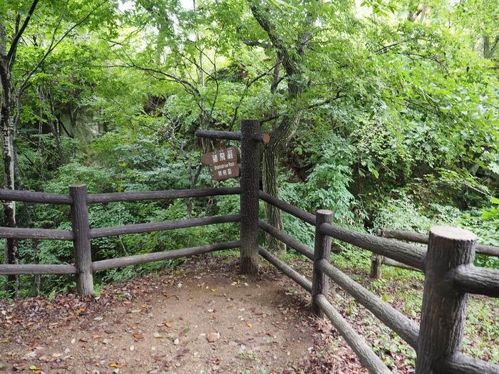 磊々峡猿飛巌の木柱風景