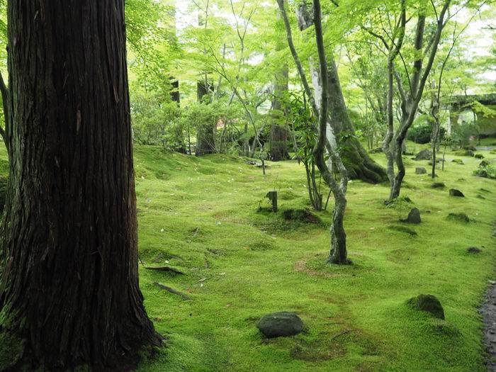 円通院のっ気の庭園の写真風景