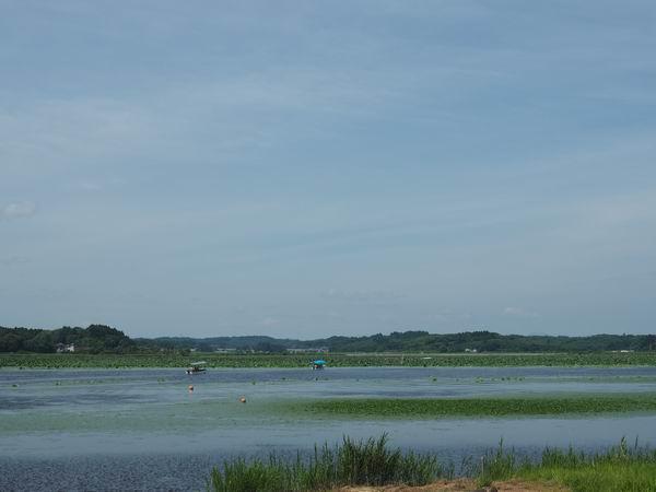 内沼遊覧船の風景写真
