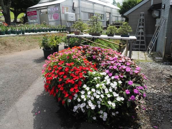 バラ園のバラの品種多数の植え込み写真