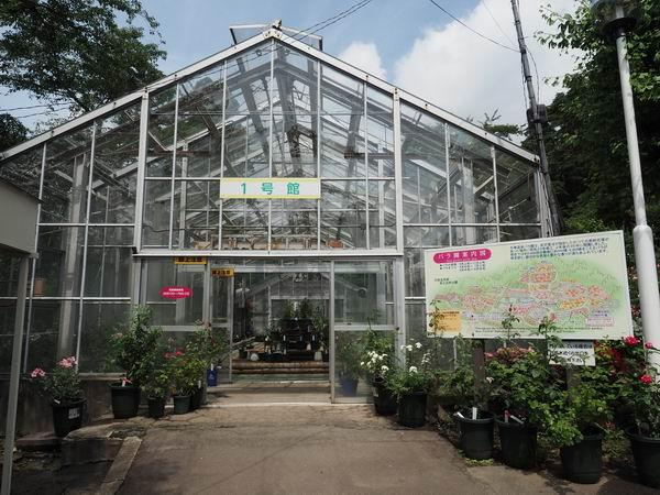 花巻温泉のバラ園の栽培ハウスの風景写真
