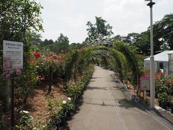 花巻温泉のバラ園の風景写真