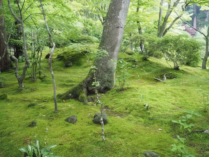 円通院の苔むす庭園の風景の写真