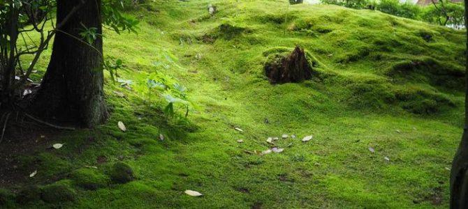 円通院の初夏の苔の庭園の風景写真