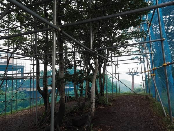 カブトムシふれあいの森の園内の風景写真