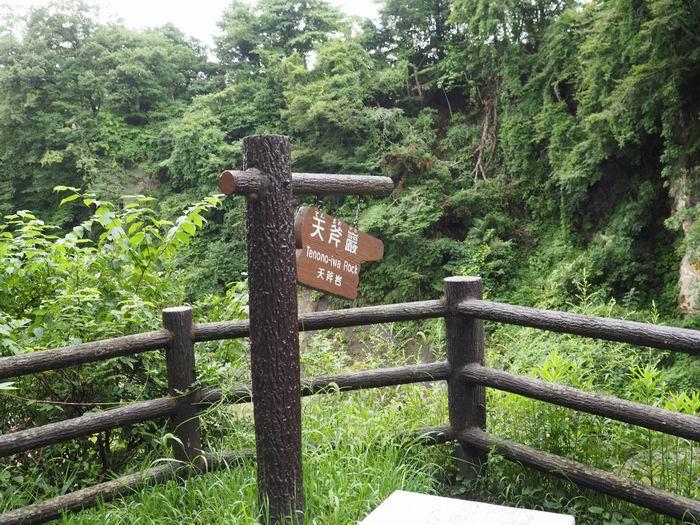 磊々峡天斧巌の木柱風景写真