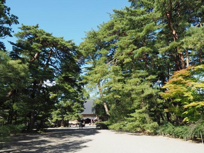毛越寺の正面風景写真