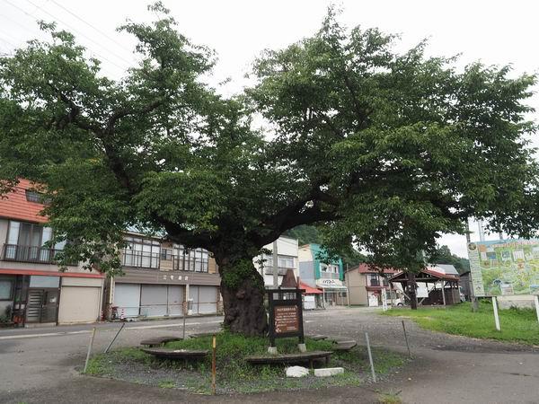 中山平温泉駅の駅前の桜